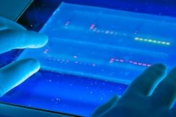 DNA - Laboratory Setting