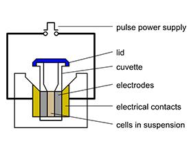 What Is Electroporation Universal Medical Blog